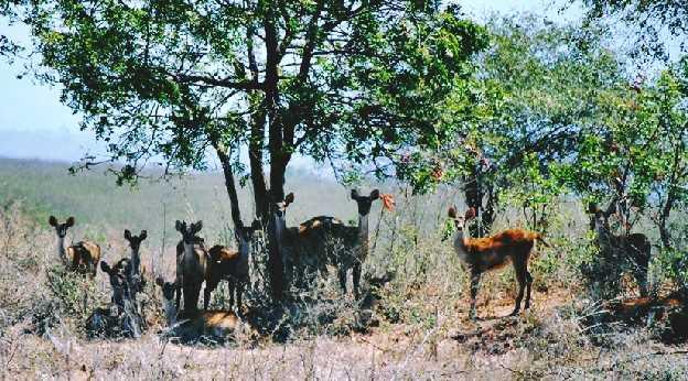 Wisata Kebun Binatang Kabupaten Rembang Wana Kartini Mantingan Gambar Lokasi