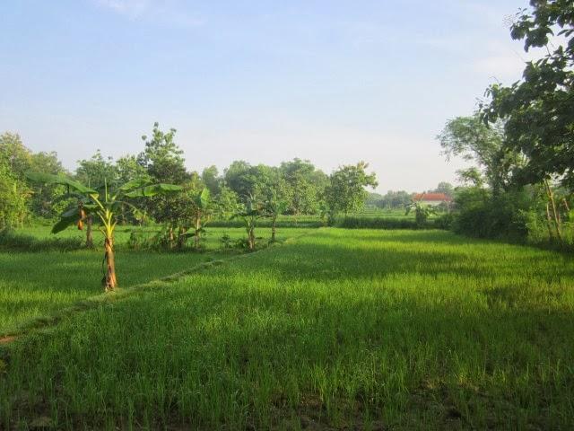 Desa Pajeruan Januari 2014 Blogspot Sebagai Negara Agraris Membentang Panjang