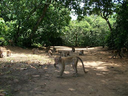 Hosinah Promosi Kab Sampang Objek Wisata Hutan Kera Nepa Terletak