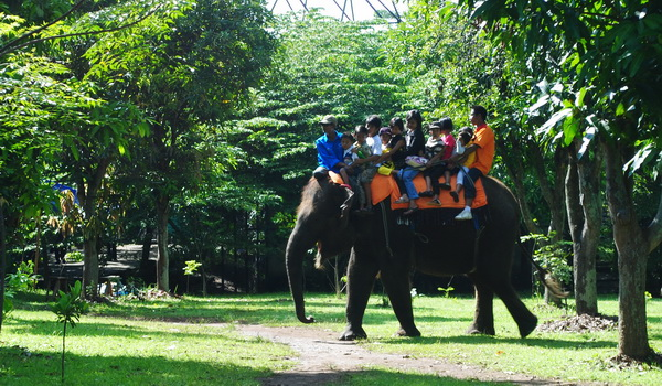 Bonbin Mangkang Kebun Binatang Semarang Taman Margasatwa Naik Gajah Kab