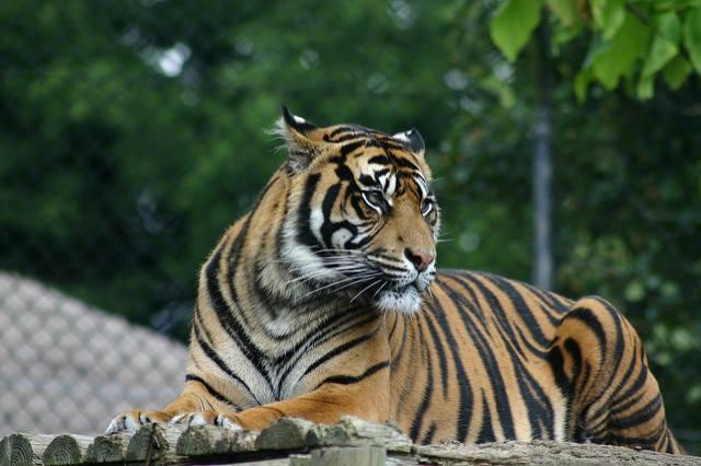 Kebun Binatang Mangkang Taman Marga Satwa Semarang Wisatapedi Bonbin Kab