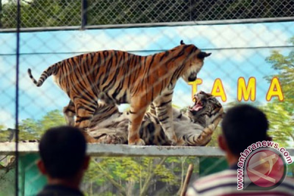 Kebun Binatang Mangkang Taman Marga Satwa Semarang Wisatapedi Rimbo Kota