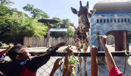 Kebun Binatang Semarang Alasan Taman Margasatwa Mangkang Jadi Pengunjung Memberi