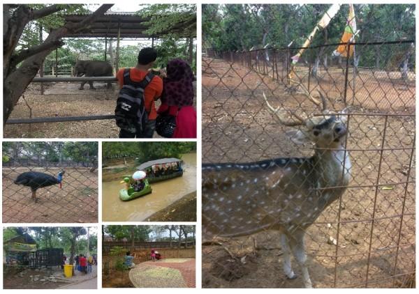 Kebun Binatang Semarang Bonbin Gimana Seru Bermanfaat Bagi Pengunjung Tempat