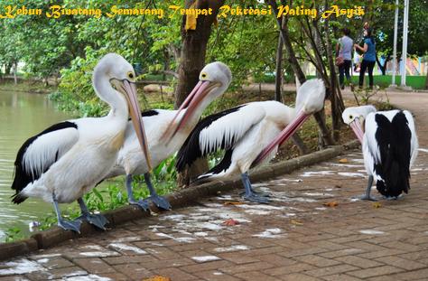 Kebun Binatang Semarang Tempat Rekreasi Asyik Gedangsari Bonbin Mangkang Kab