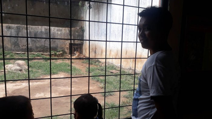 Pengunjung Senang Lihat Orangutan Gajah Bonbin Mangkang Menikmati Wisata Murah