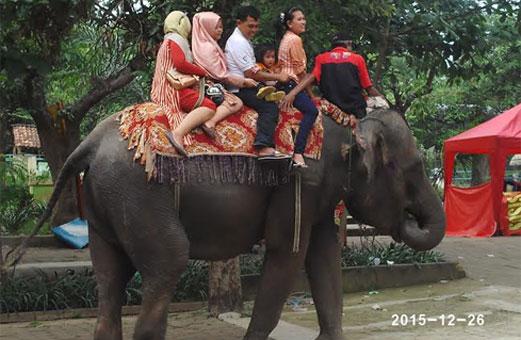 Warta Ekspres Libur Panjang Pengunjung Kebun Binatang Mangkang Semarang Wartaekspres