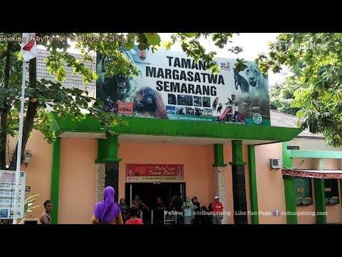 Wisata Keluarga Kebun Binatang Mangkang Kota Semarang Youtube Bonbin Kab