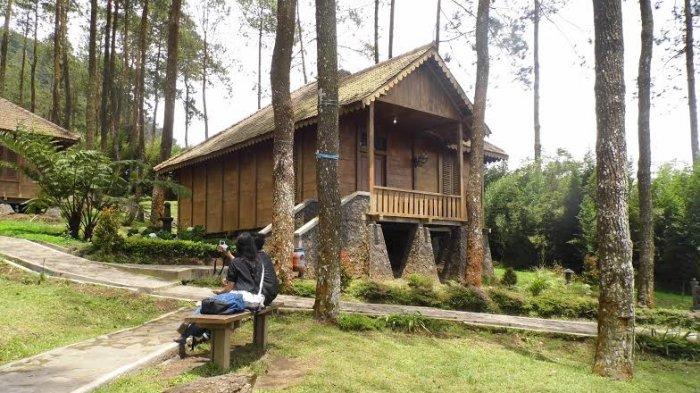 Rumah Kayu Antara Pohon Pinus Jadi Alternatif Tempat Istirahat Usai