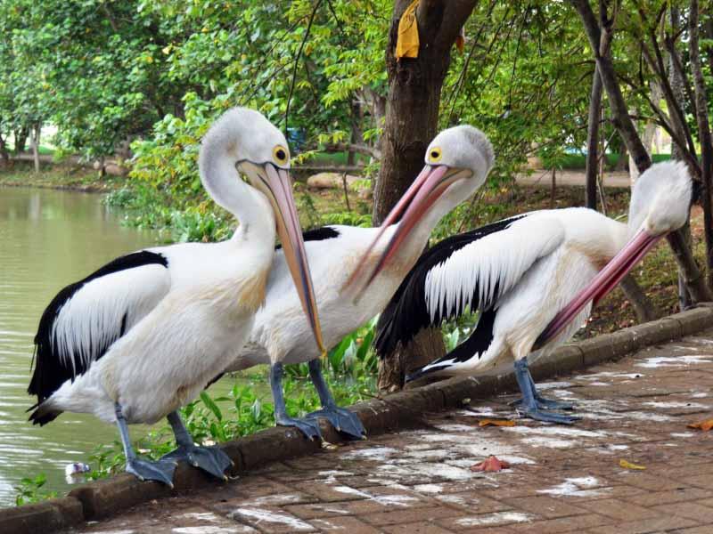 12 Obyek Wisata Semarang Patut Dikunjungi Kebun Binatang Jungle Toon