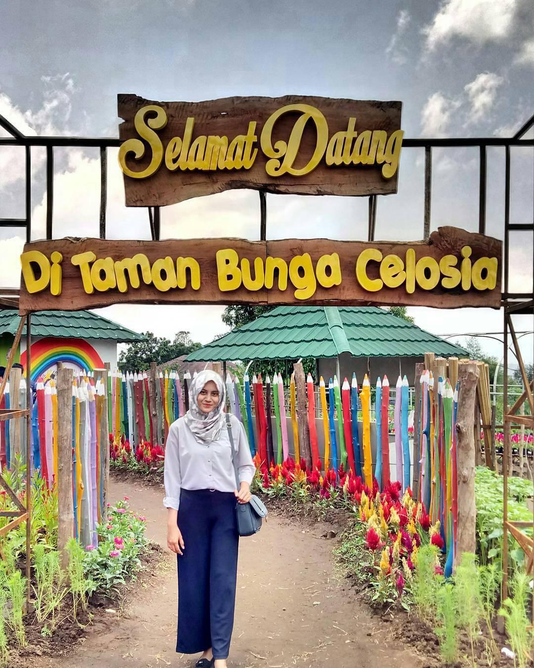 Kolam Renang Semarang Sebuah Perjalanan Wisata Taman Bunga Celosia Bandunga