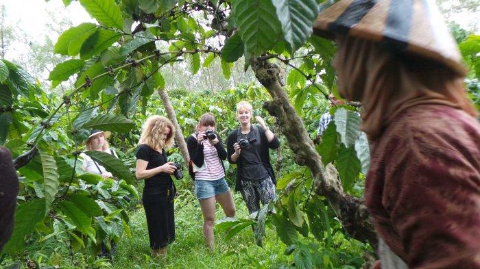 Empat Jurnalis Cantik Asal Belanda Blusukan Kebun Kopi Banaran Tribun