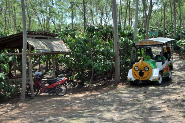 Kampoeng Kopi Banaran Pikiran Kebun Gayo Raga Kab Semarang