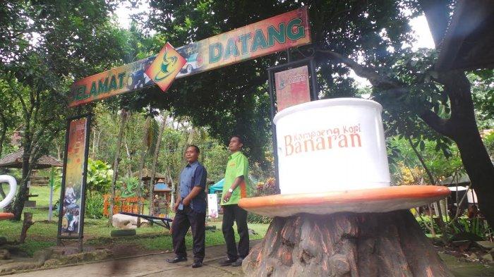 Long Weekend Kampoeng Kopi Banaran Kebanjiran Pengunjung Tribun Kab Semarang