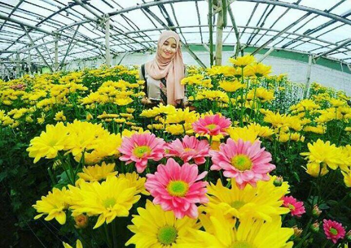 100 Tempat Wisata Semarang Sekitarnya Terkenal Berupa Kebun Tanami Berbagai