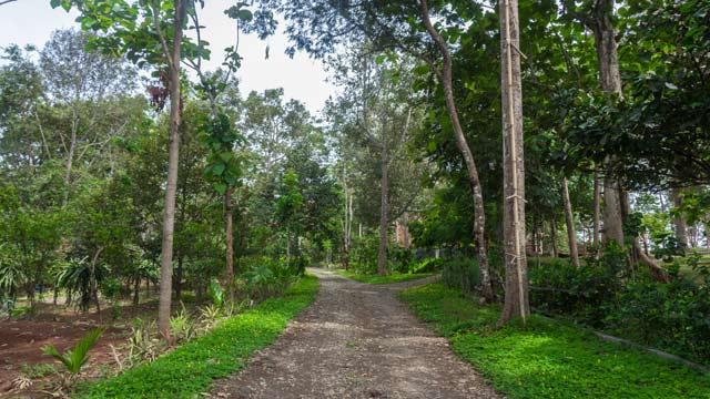 55 Tempat Wisata Semarang Sekitarnya Terbaru Malam Hari Dekat Kebun