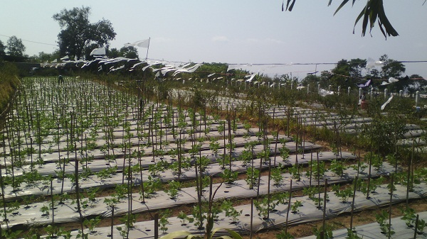 Semarang Coret Wisata Edukasi Kebun Benih Hortikultura Bandungan Disini Kita