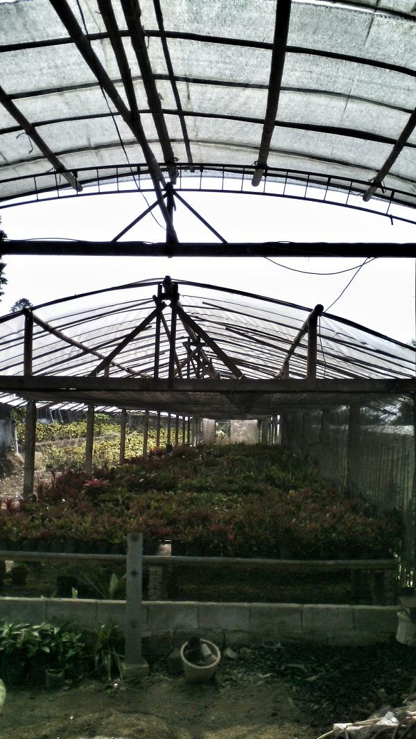 Semarang Coret Wisata Edukasi Kebun Benih Hortikultura Bandungan Senin 19