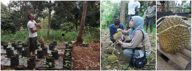 Temu Kencono Wisata Agro Semarang Menariknya Disini Mendapat Informasi Durian