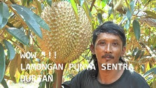 Video Kebun Durian Watu Simbar Semarang 3gp Mp4 Hd Tama