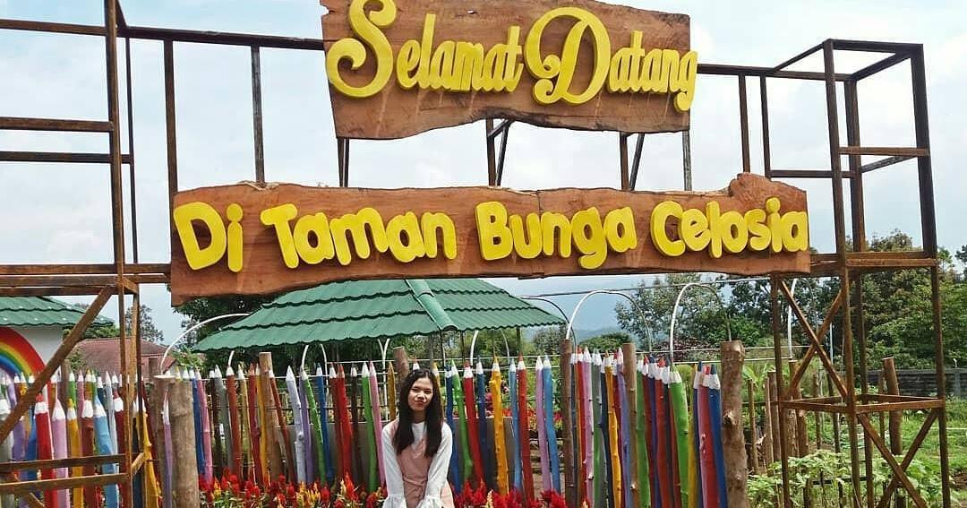 Tiket Masuk Lokasi Taman Bunga Celosia Bandungan Semarang Diponegoro Kab