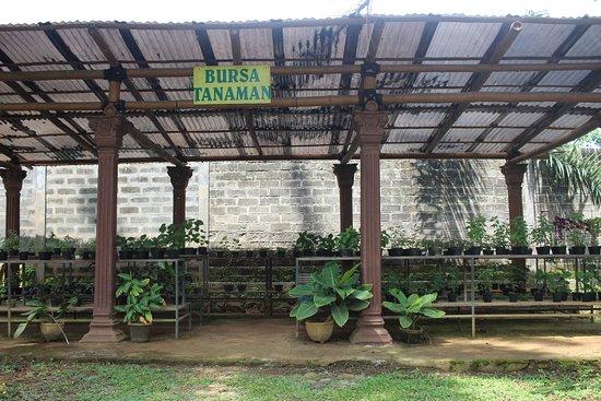 Contoh Jenis Bahan Jamu Ruang Resepsionis Taman Djamoe Indonesia Setiap