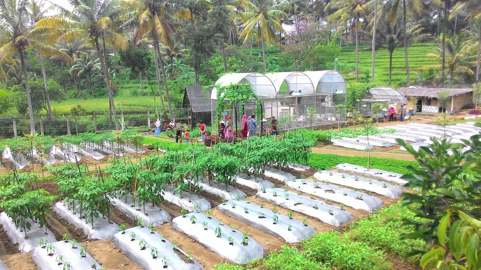 Semarang Coret 10 Tempat Wisata Ngehits Kabupaten Taman Djamoe Indonesia
