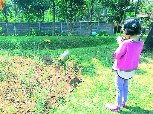 Taman Djamoe Indonesia 2bdjamoe 2bbawen17 Jpg Kab Semarang