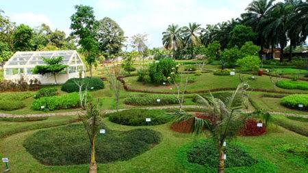 Walls Taman Djamoe Masyarakat Bisa Mengenal Lebih Dekat Keanekaragaman Tanaman