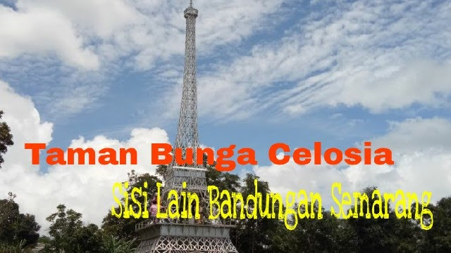 Anjar Sundari Taman Bunga Celosia Sisi Lain Bandungan Kabupaten Tujuan
