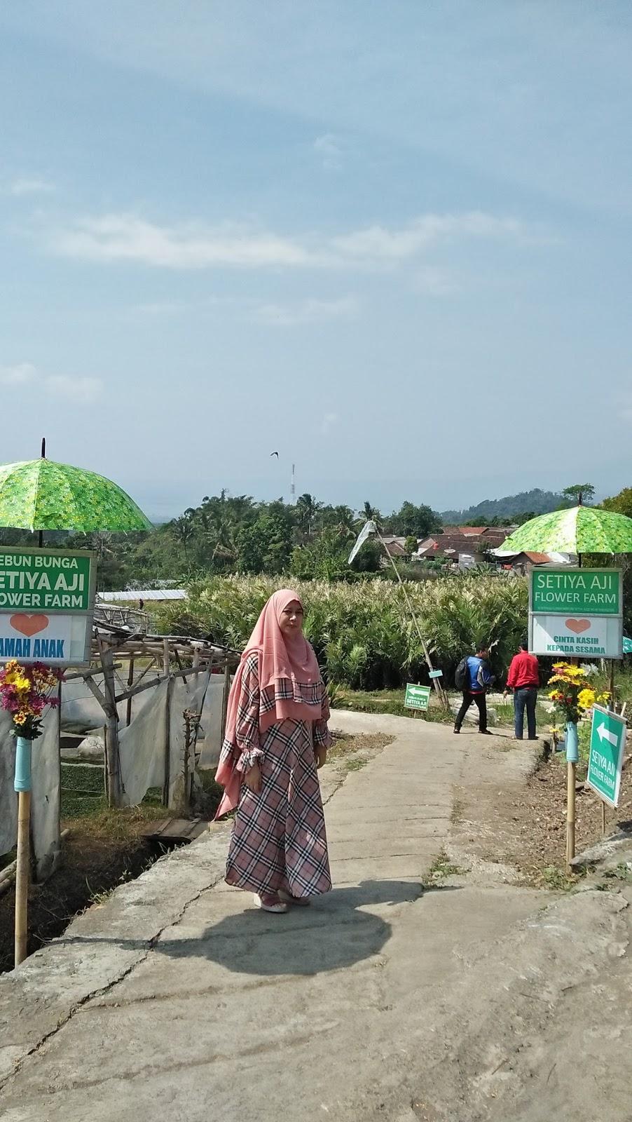 Beraneka Warna Bunga Chrysan Setiya Aji Flower Farm Kampung Krisan
