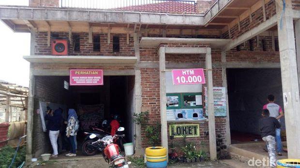 Cantik Kampung Bisa Selfie Bareng Hamparan Bunga Krisan Loket Pembelian