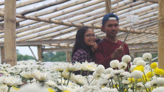 Heboh Berselfie Ria Rp 10 Ribu Taman Bunga Krisan 1