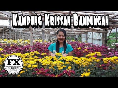 Kampung Bunga Review Bandungan Vlogester Youtube Wisata Krisan Clapar Kab