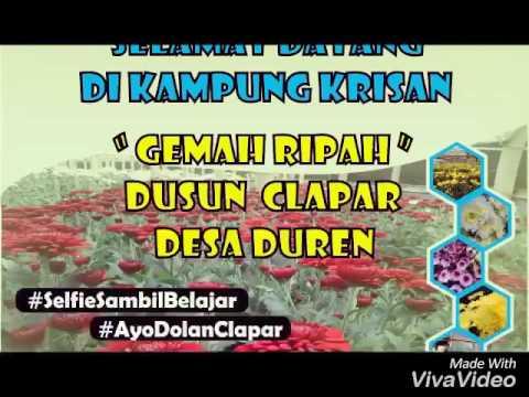 Kampung Krisan Clapar Ayodolanclapar Youtube Wisata Kab Semarang