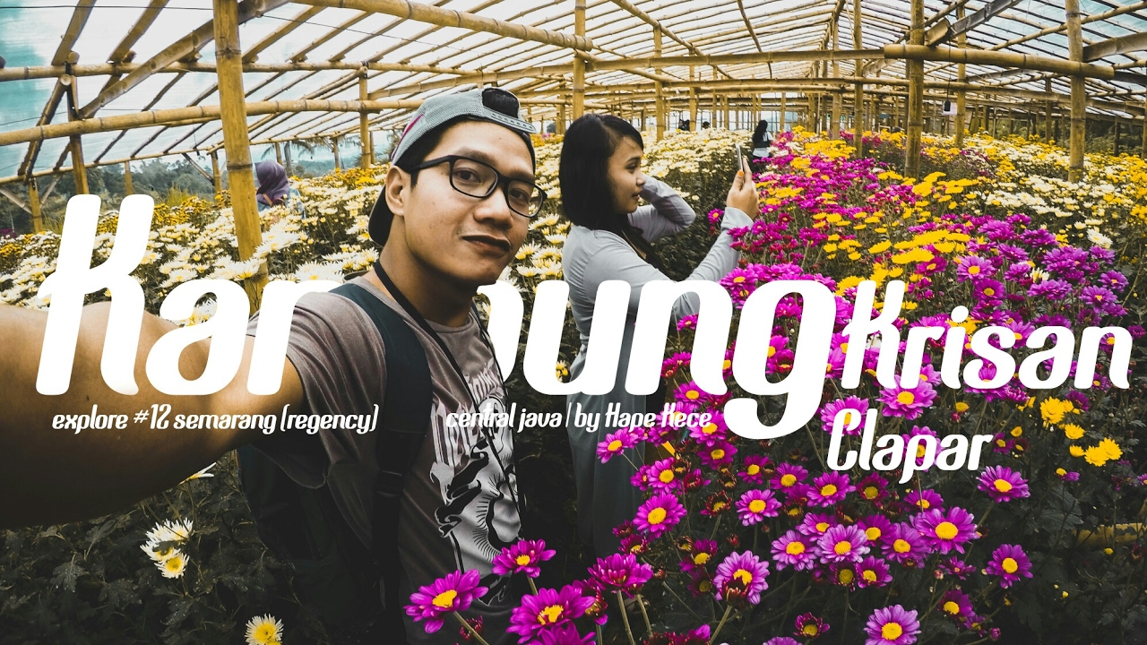 Kampung Krisan Clapar Bandungan 12 Explore Semarang Central Java Wisata