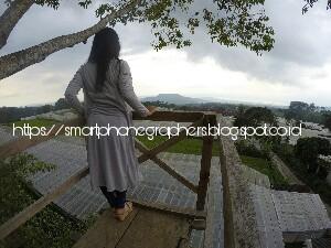 Kampung Krisan Clapar Wisata Warna Warni Bunga Smartphonegraphers Setelah Melewati