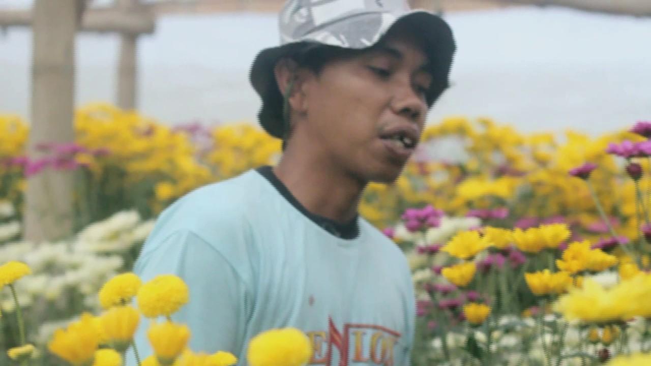 Kampung Krisan Clapar Youtube Wisata Kab Semarang