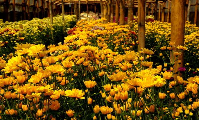 Kebun Bunga Pak Yoto Wisata Bagi Keluarga Myimage Kampung Krisan
