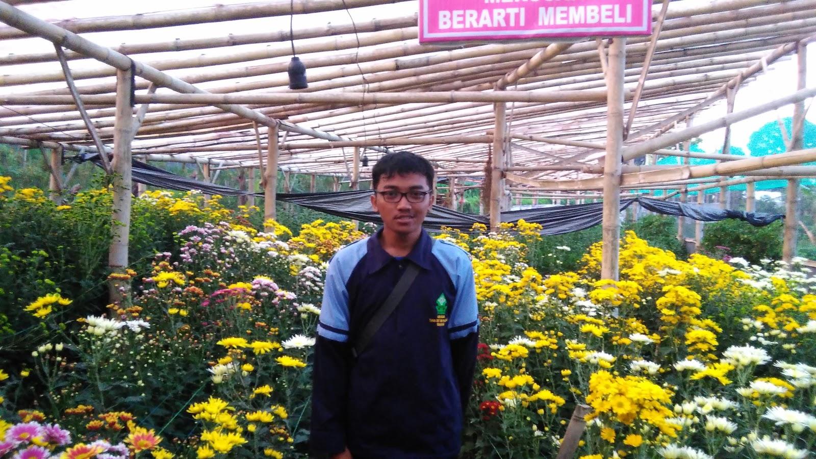 Pariwisata Kampung Krisan Clapar Read Wisata Kab Semarang