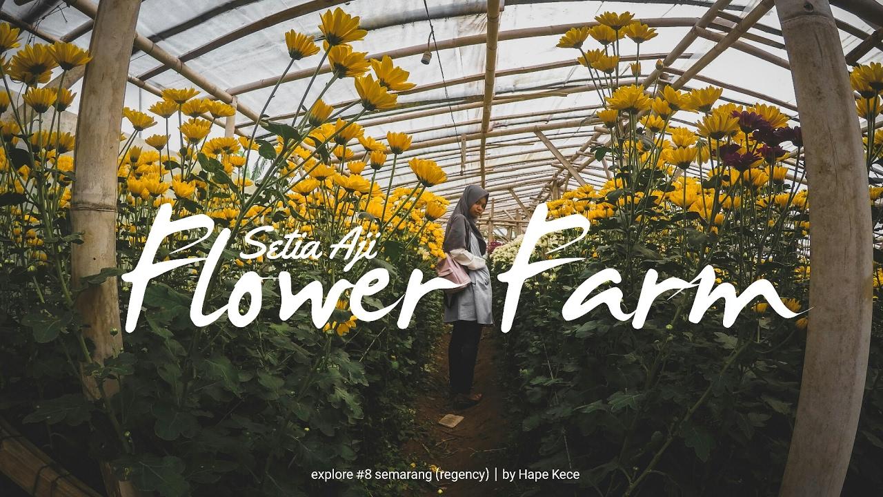 Setia Aji Flower Farm Bandungan 8 Explore Semarang Central Java