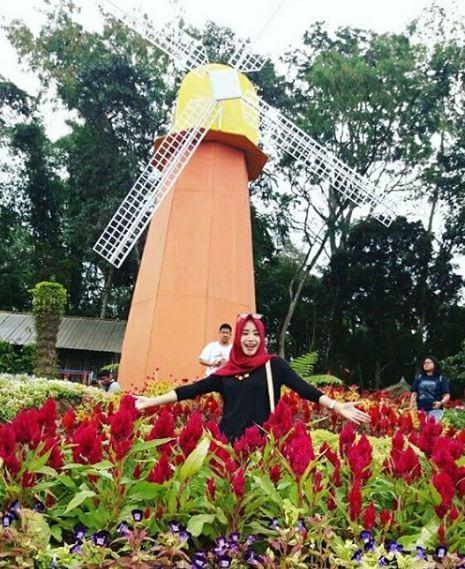 Spot Corner Hits Semarang Taman Bunga Celosia Bandungan Kincir Angin