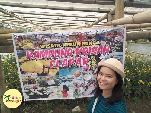 Wisata Kebun Bunga Kampung Krisan Clapar Setiya Aji Flower Berjalan