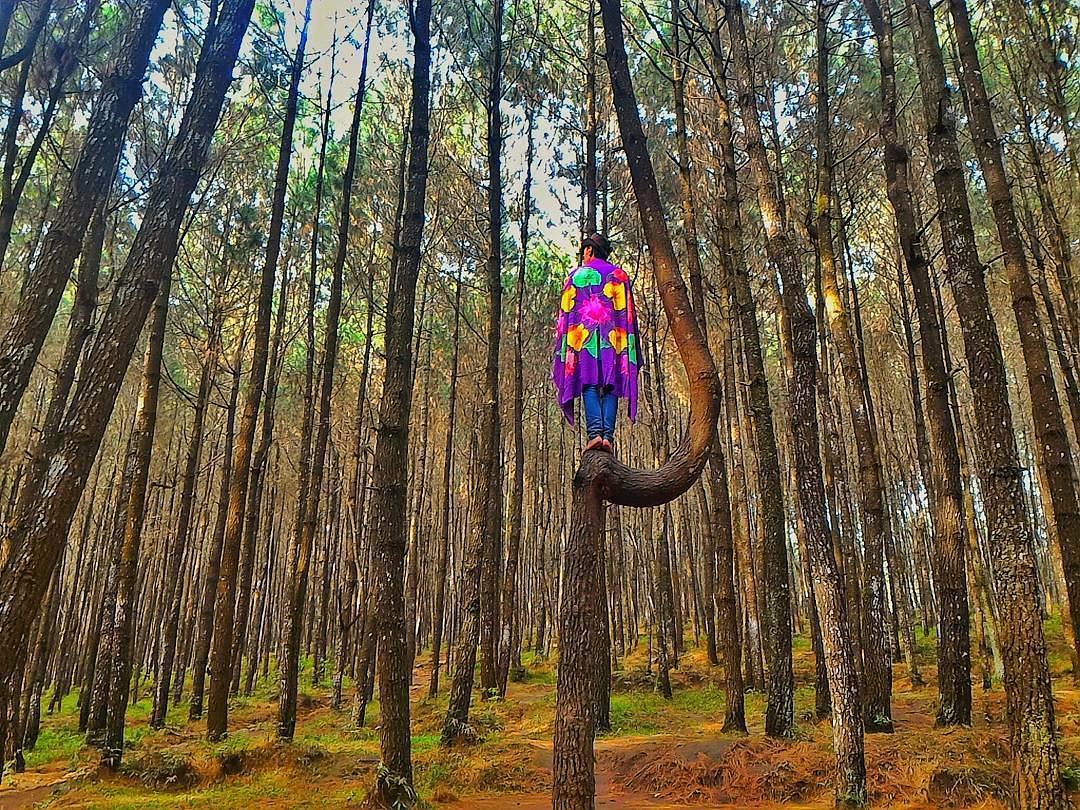6 Tempat Wisata Semarang Hits Ngadem Hutan Pinus Kayon Terbaik