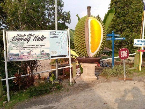 Berani Uji Stamina Lereng Kelir Oleh Bambang Setyawan Durian Raksasa