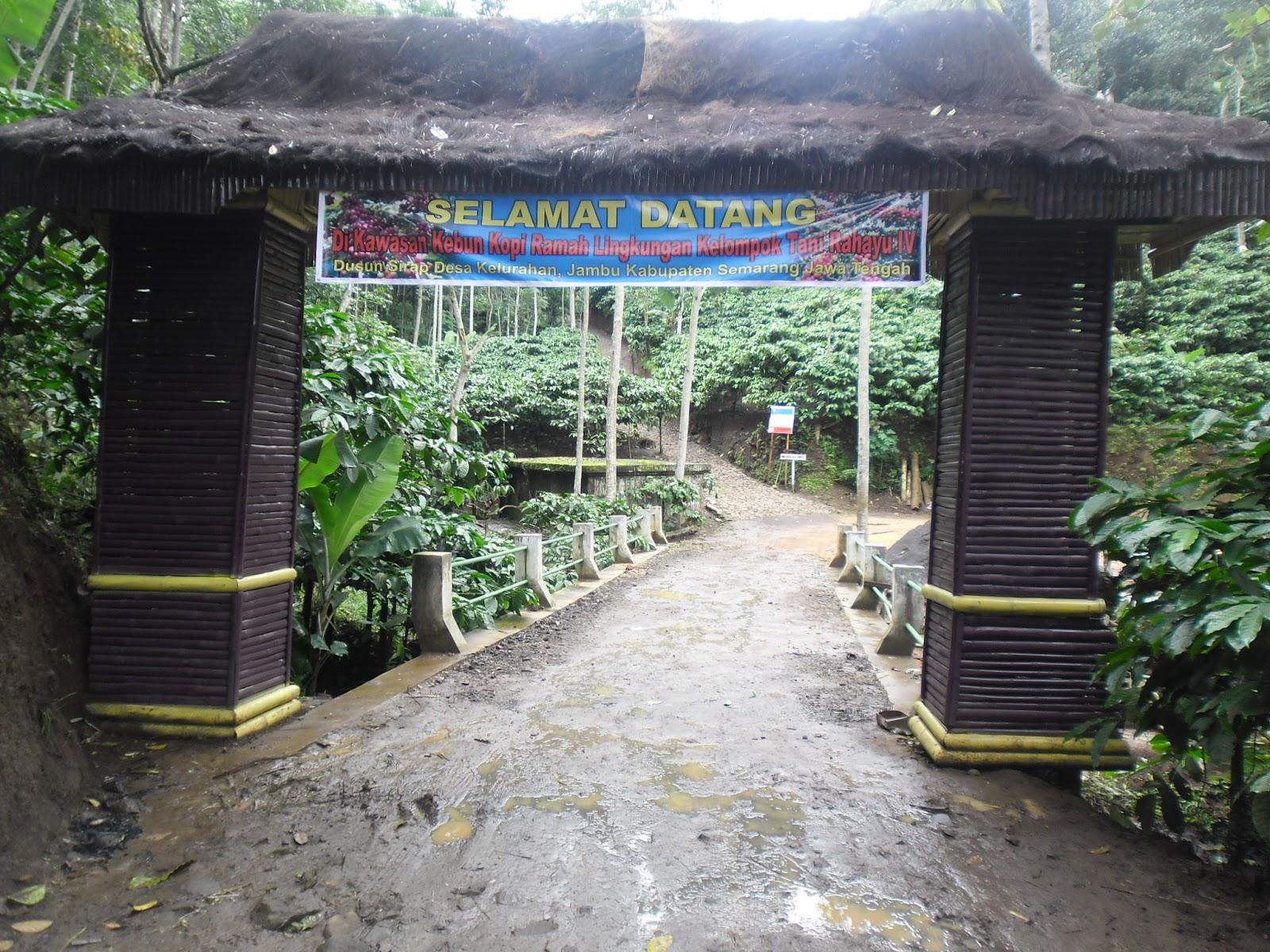 Kopi Kelir Gerbang Kawasan Wisata Kebun Kaki Surga Gunung Dimana