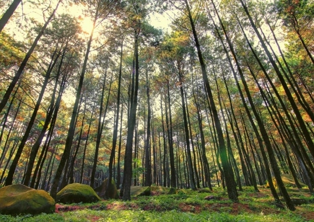Wisata Puncak Lereng Kelir Gertas Ambarawa Wisatalova Hutan Pinus Kab