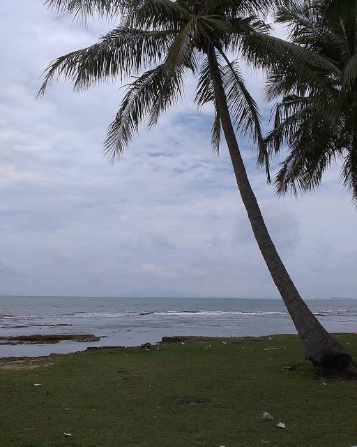 Kawasan Pantai Anyer Destinasi Populer Banten Foto Pohon Kelapa Pinggir