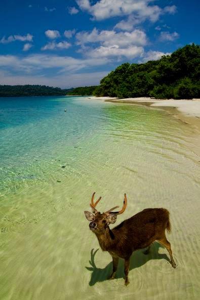 7 Pulau Banten Menawan Liburan Klikhotel Burung Kab Serang