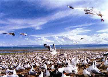 Destinasi Wisata Banten Eloratour Pulau Burung Dua Salah Satu Tempat